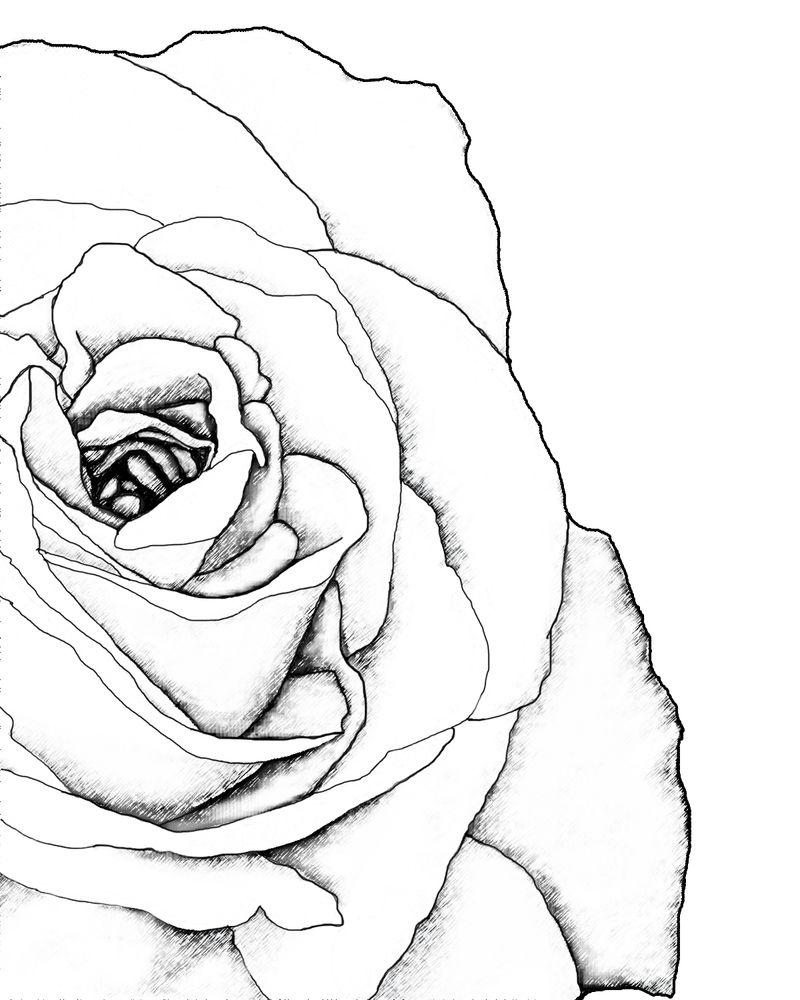 Drawn rose corner
