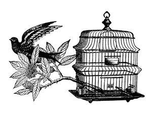 Free_as_a_bird